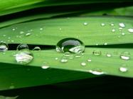 correccion acido urico de forma naturales acido urico uricemia acido urico elevado tratamento natural